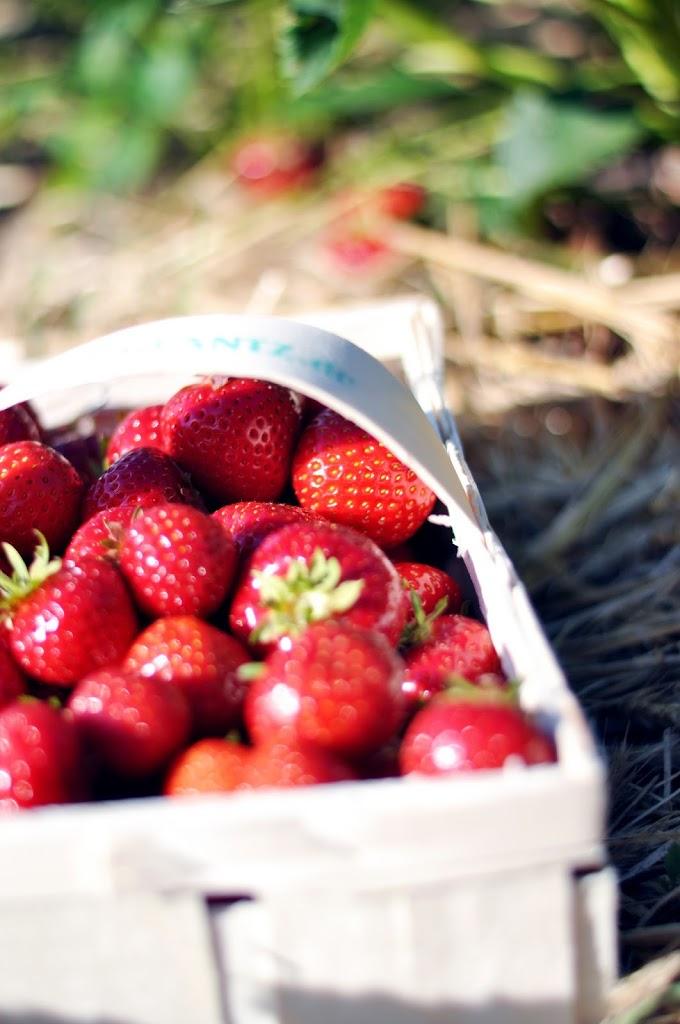 Erdbeeren pflücken Hamburg