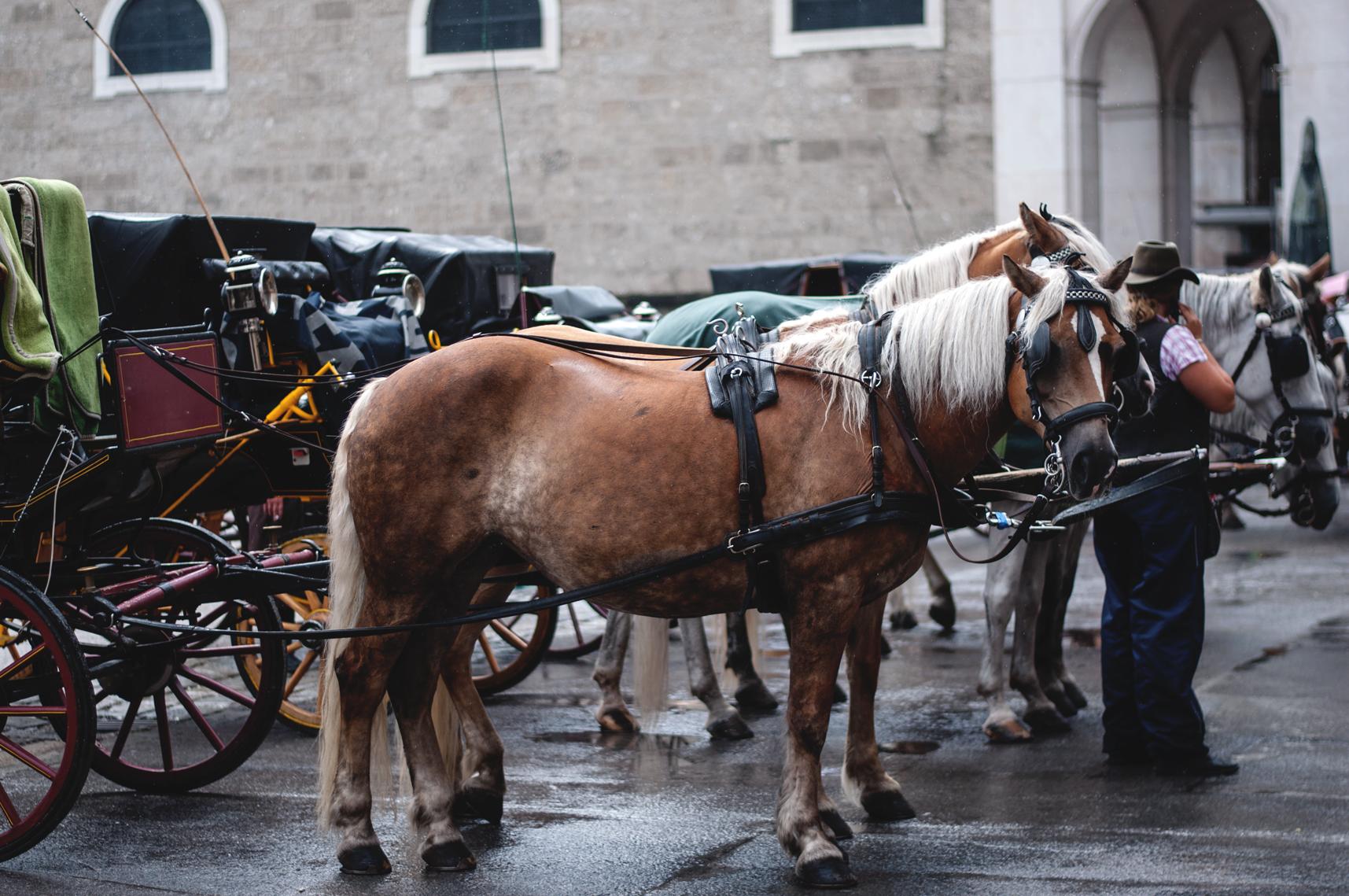 Salzburg Pferdekutsche