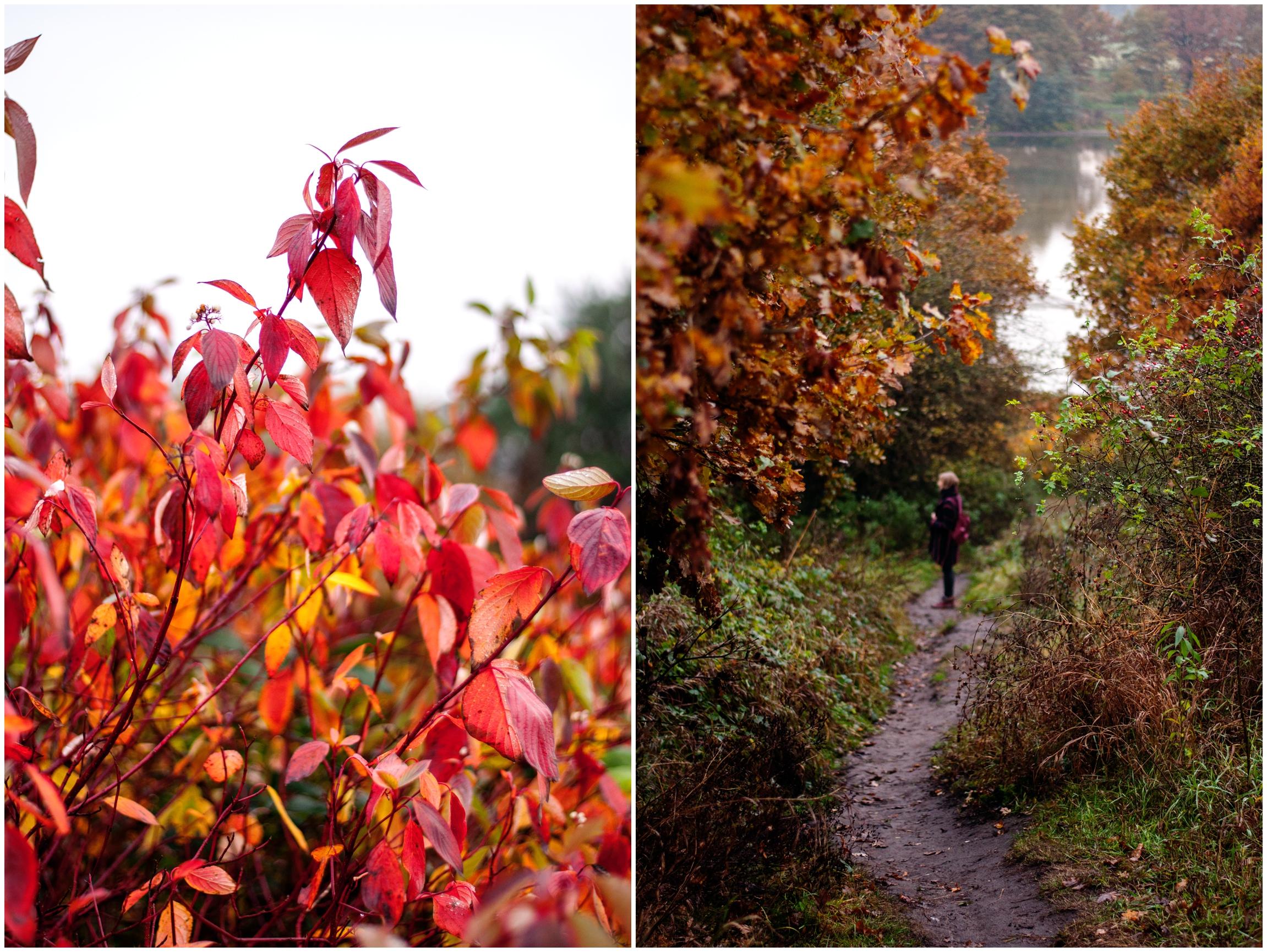 Herbstspaziergang Blätter