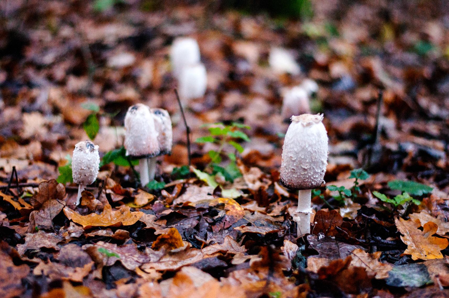 Herbstspaziergang Pilze