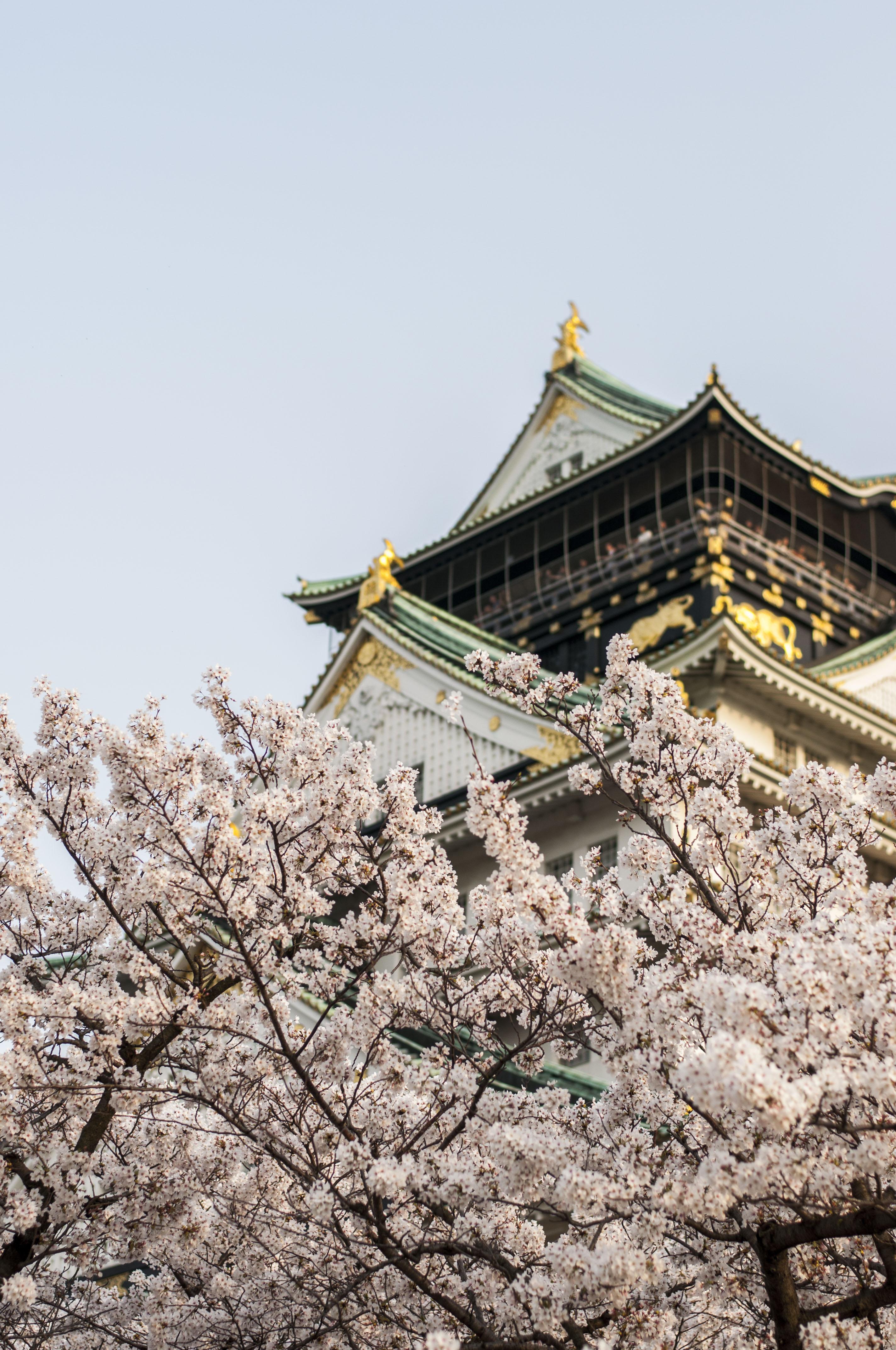 Osaka Castle Kirschblüte